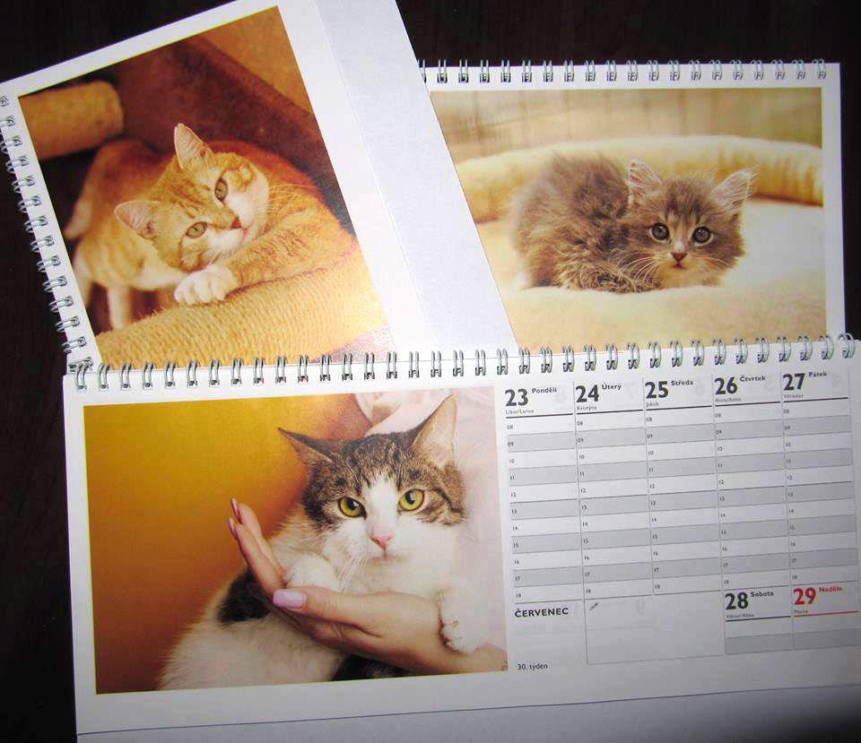 Kalendář 2018 Kočky